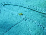 20080502キマダラウミコチョウ