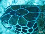 七番岬3_20080816