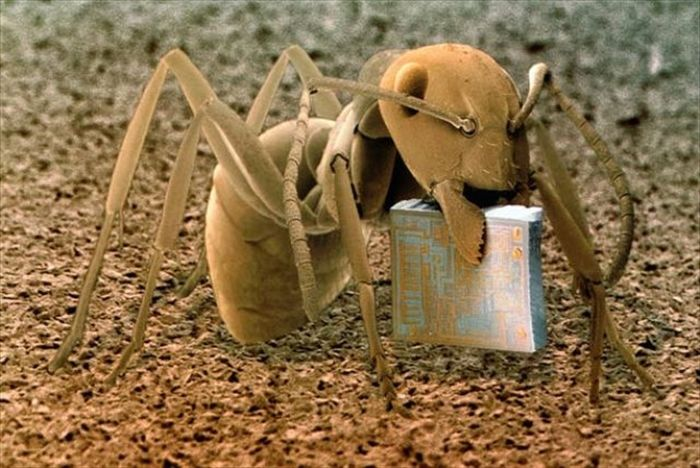 amazing_scanning_electron_microscope_pictures_24_pics-1