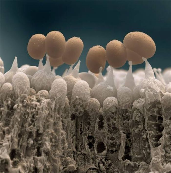 amazing_scanning_electron_microscope_pictures_24_pics-19