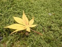 京都便利屋が撮影した竜安寺の紅葉2