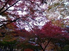 京都便利屋が撮影した南禅寺の紅葉2