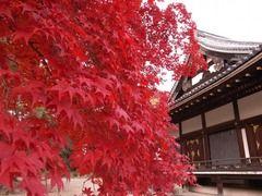 京都便利屋が撮影した仁和寺の紅葉3