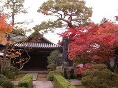 京都便利屋が撮影した妙心寺の紅葉1