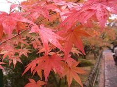 京都便利屋が撮影した大徳寺の紅葉