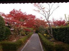京都便利屋が撮影した妙心寺の紅葉2