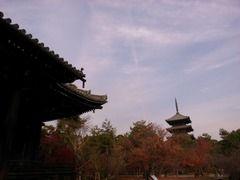 京都便利屋が撮影した仁和寺の紅葉