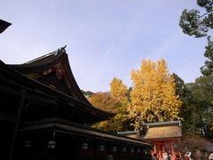 京都便利屋が撮影した北野天満宮の紅葉1