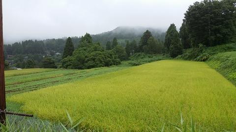 稲とそばのコラボレーション