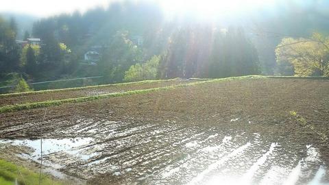 今日も肥料と耕運