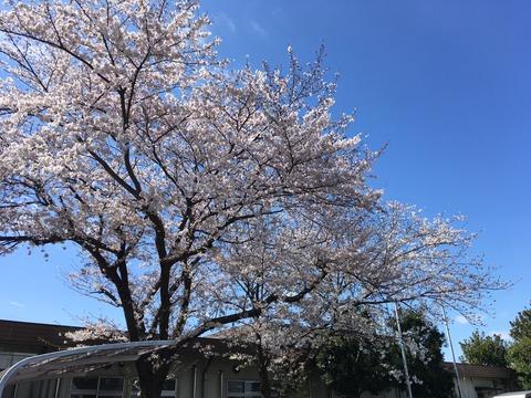 サクラ実況 in ヨコハマ