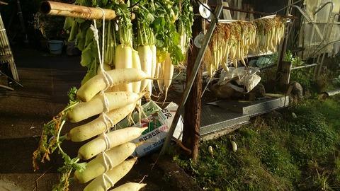 冬野菜パレード