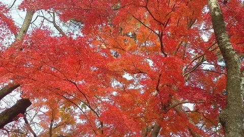 秋の装い 2