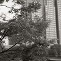 260406_中央公園-09