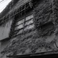 260413_淀橋-10