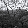 260406_中央公園-07