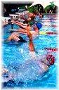 オーストラリア日本語教師水泳