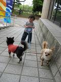 犬の散歩デビュー