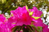 五月といえばこの花ね