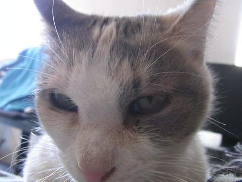 03_cat02