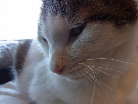 01_cat09
