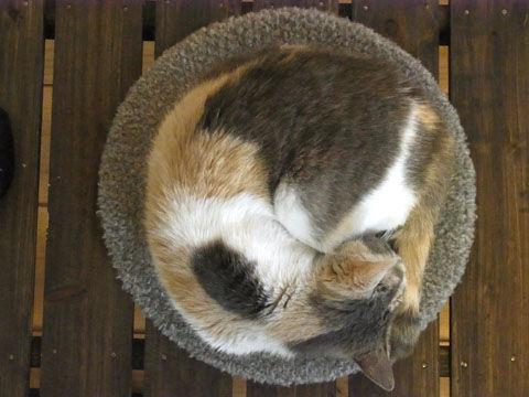 06_cat01