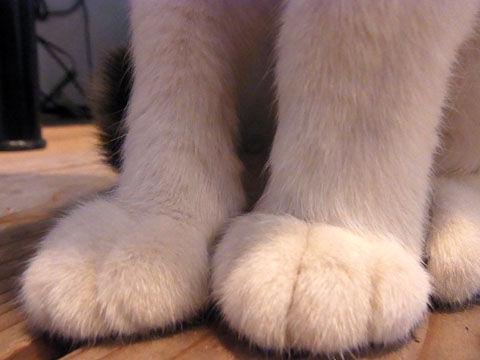 01_cat03