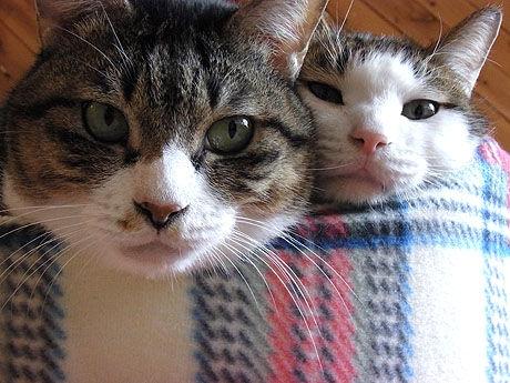 01_cat10