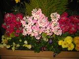 1花壇の花1
