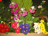 2花壇の花2