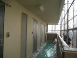 北側廊下塗装中