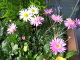 1月の花壇2