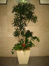 7正面観葉樹