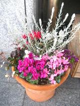 1月の両脇の花