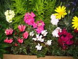 12花壇の花2