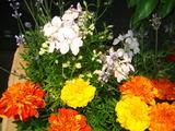 6月花壇の花2