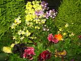 4花壇の花2