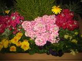 1花壇の花2
