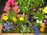 5月の花壇1