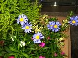 3花壇の花2