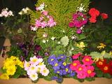 2花壇の花1