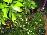 11花壇の花2
