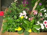 11月の花壇の花2