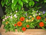 7月花壇1