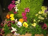 4花壇の花1