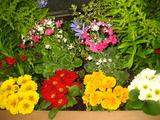 3の花壇の花1