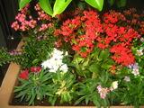 10花壇1