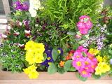3花壇の花1