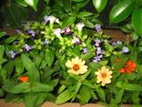 7月花壇2