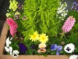 4月花壇の花1